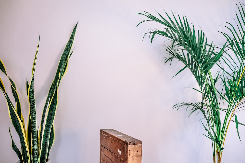 green snake plant beside brown wooden cabinet