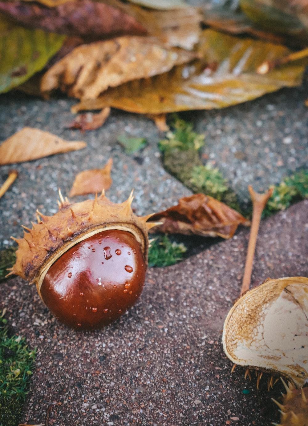 brown fruit on gray concrete floor