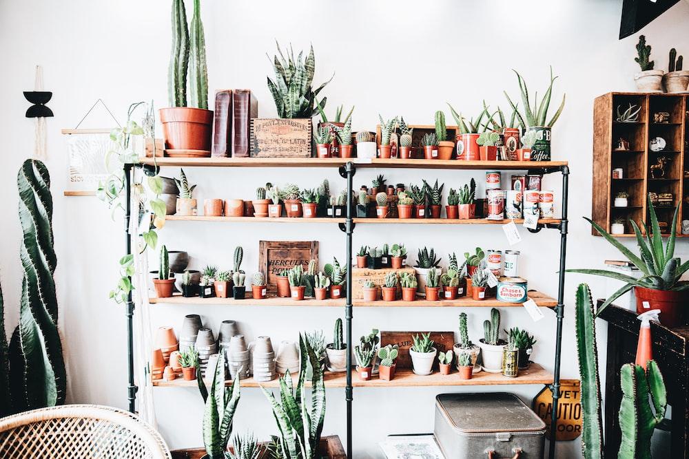 green cactus plants on white wooden shelf