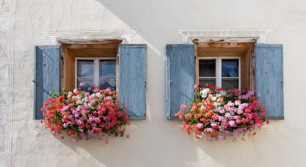 pink and white flowers on blue wooden window