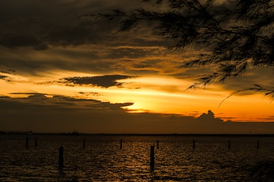 Klang silhouette of palm trees near body of water during sunset