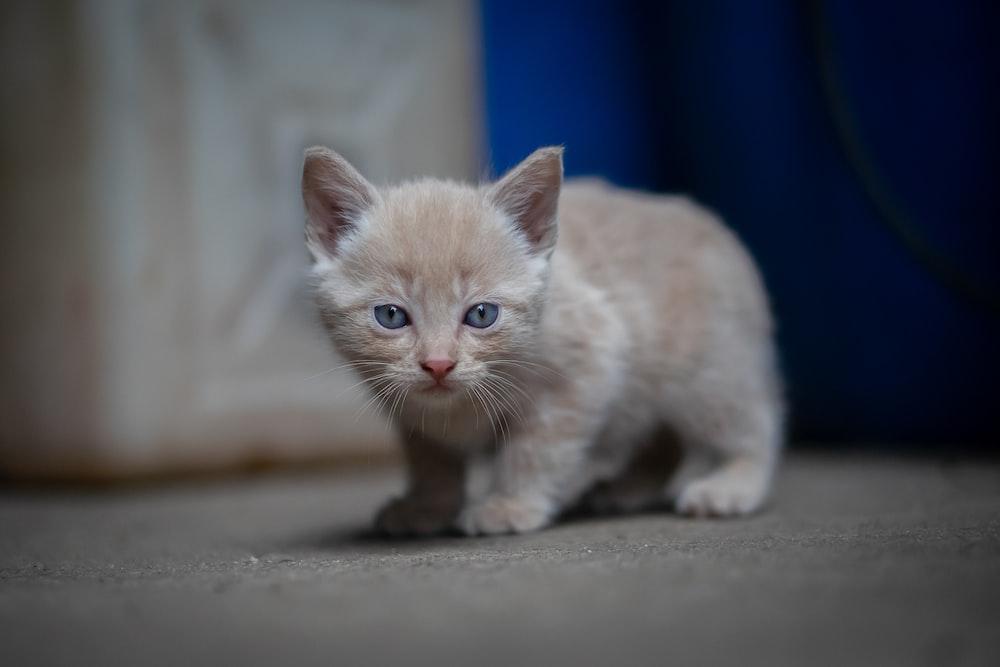 orange tabby kitten on white surface