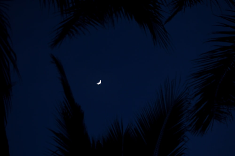 silhouette of coconut palm trees during night time