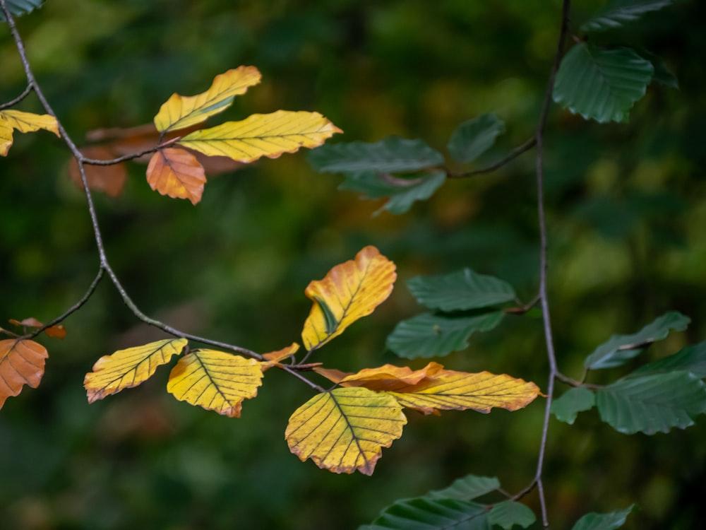 brown leaves on green stem