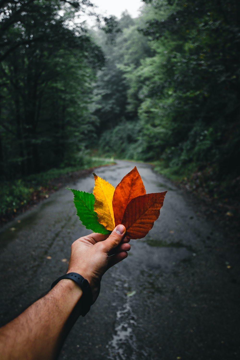person holding yellow and brown leaf