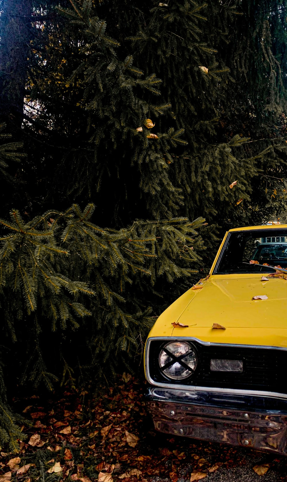 yellow car parked near green trees during daytime