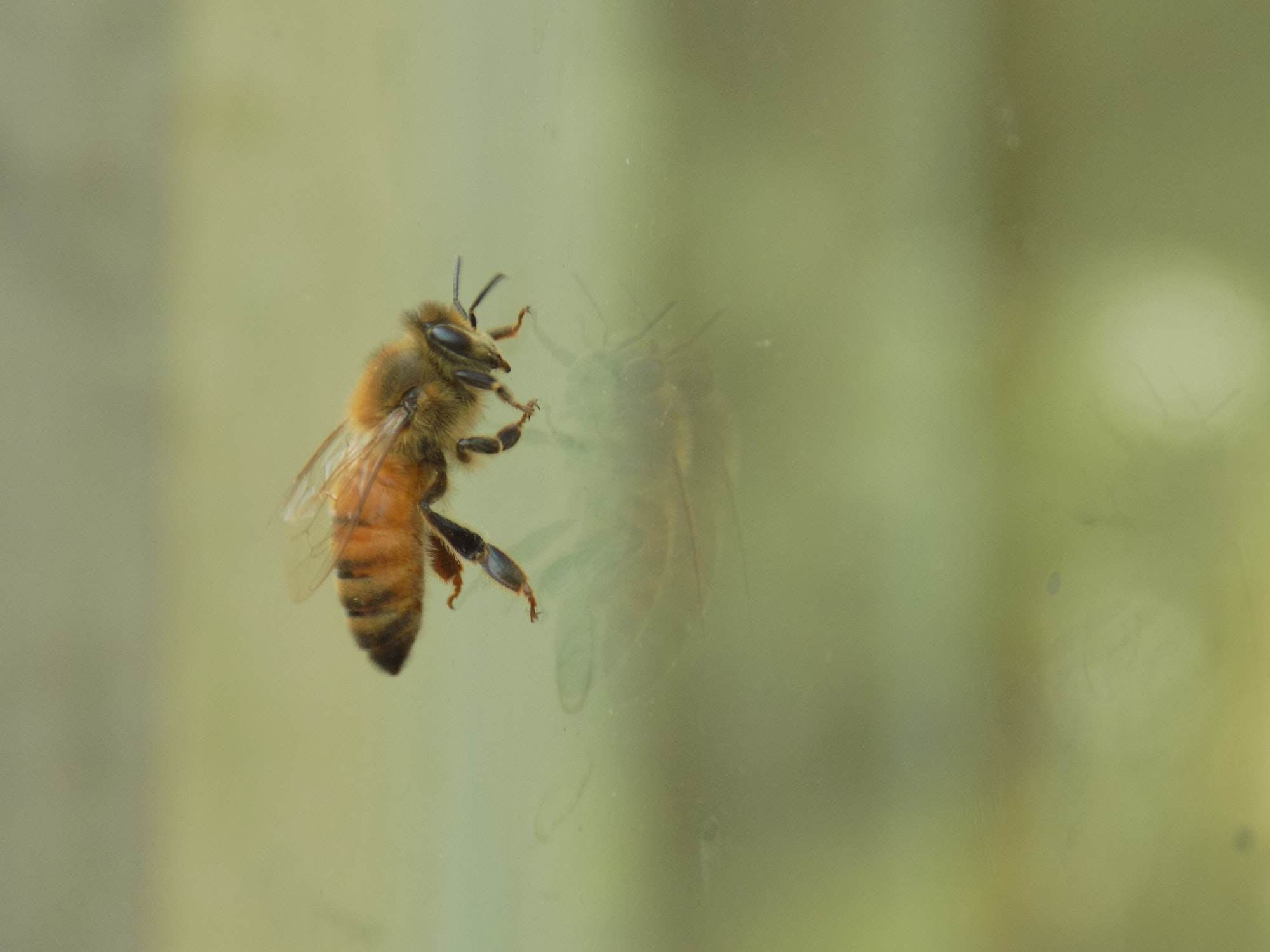 How Dangerous Can a Wasp Be?