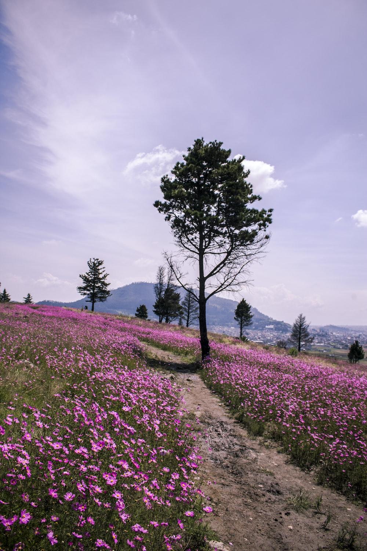 purple flower field under cloudy sky during daytime