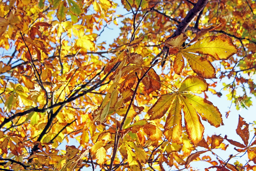 yellow and brown leaves on tree