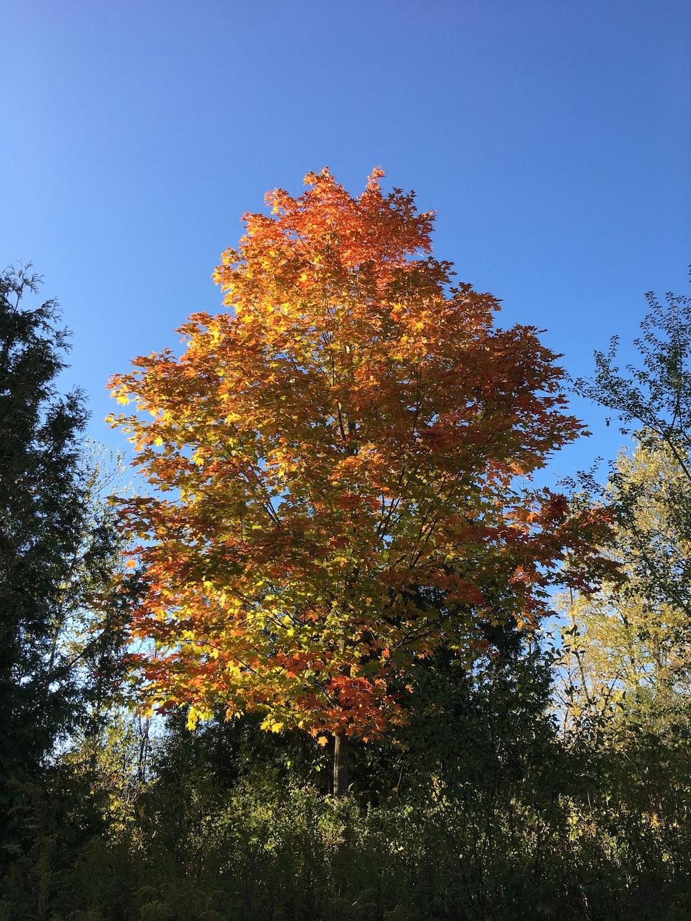 orange and green leaf tree under blue sky during daytime