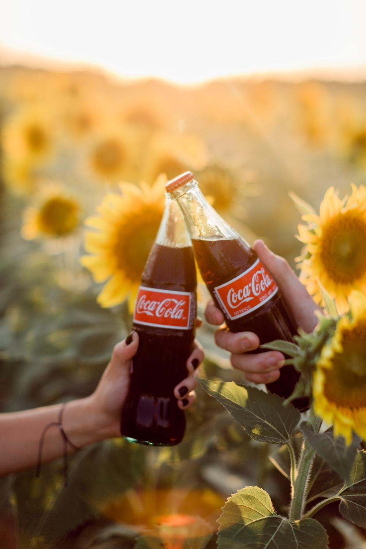 coca cola bottle on sunflower field