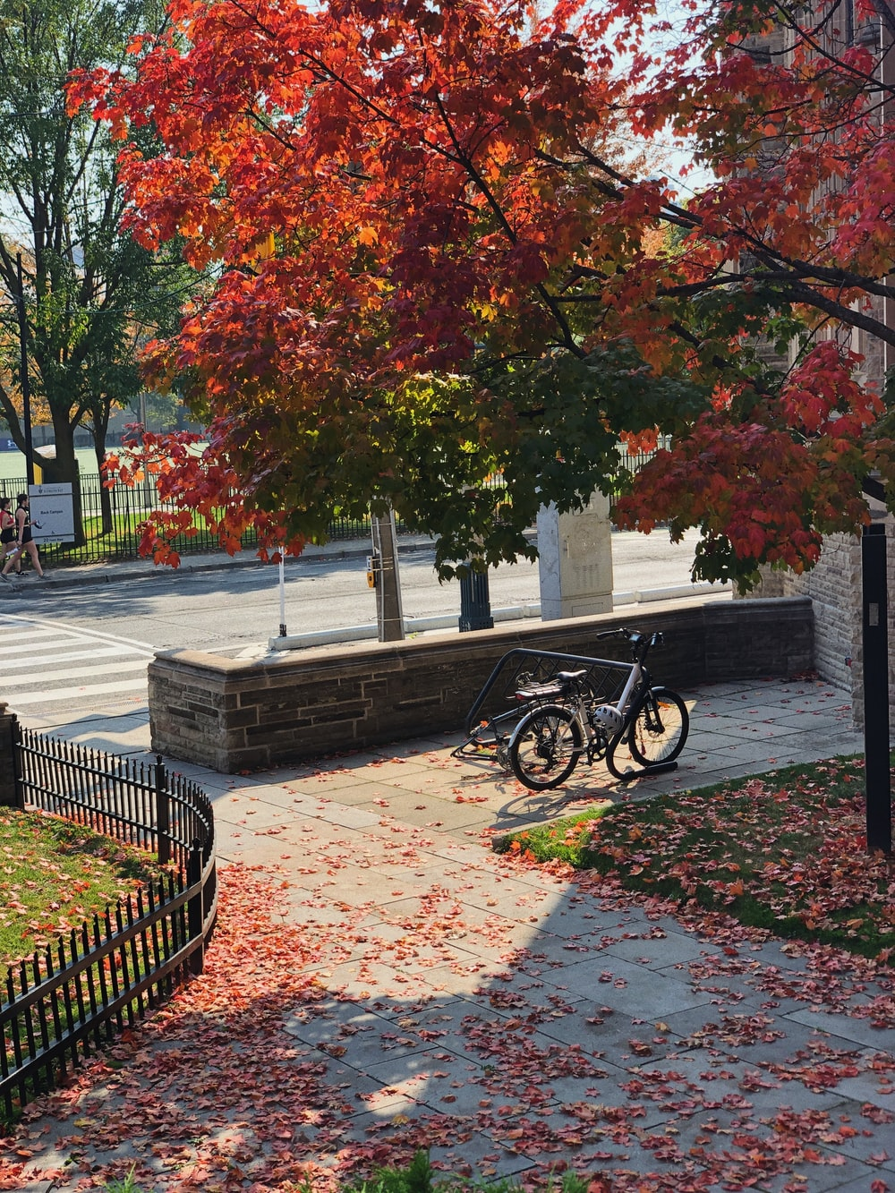black bicycle parked on gray concrete bench near green and brown trees during daytime