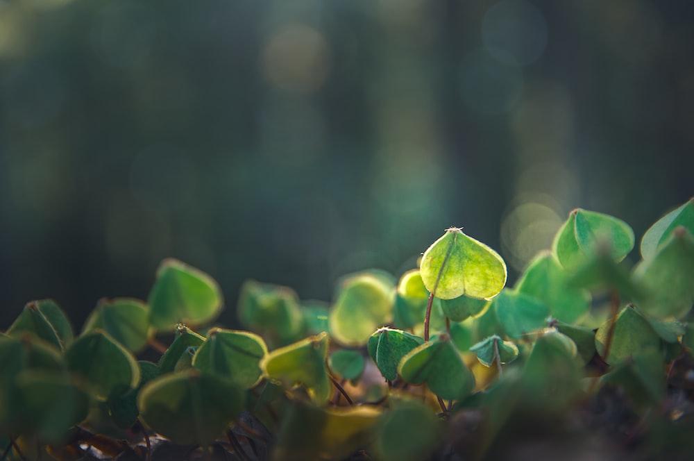 green leaves on black soil