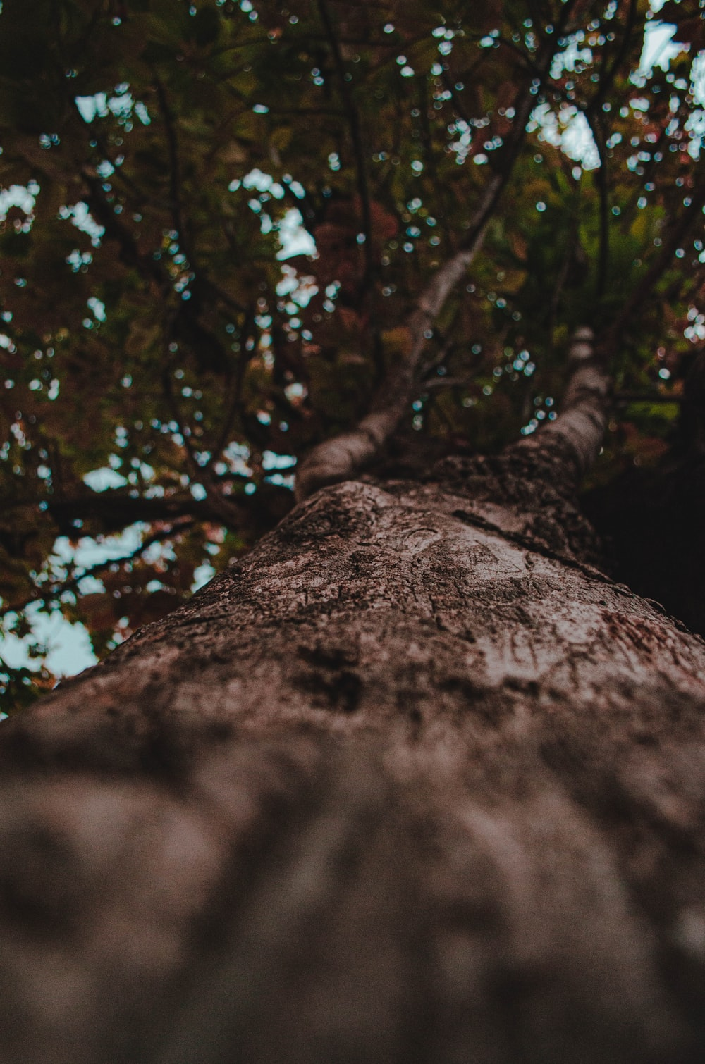low angle photography of tree trunk