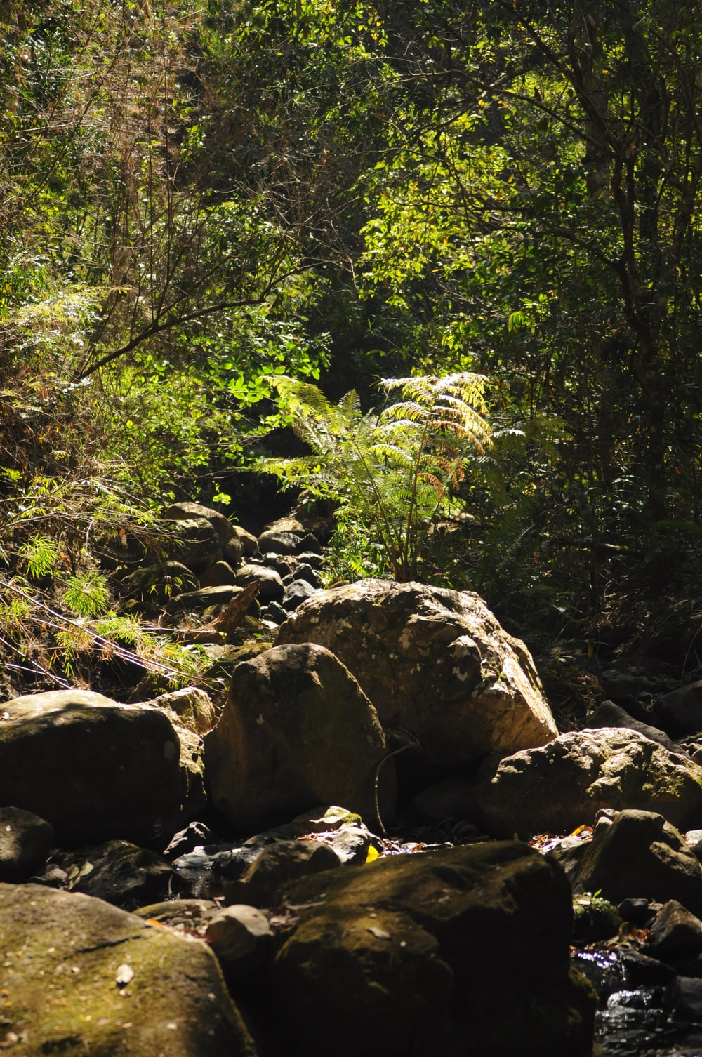 gray rocks near green trees during daytime