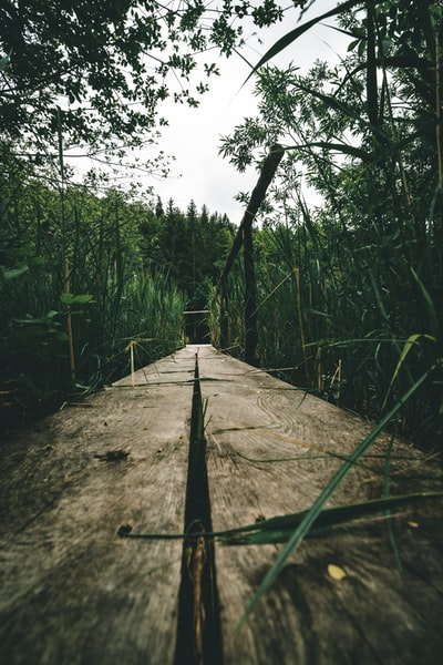 Wooden walkway to a little like near the town Miesbach