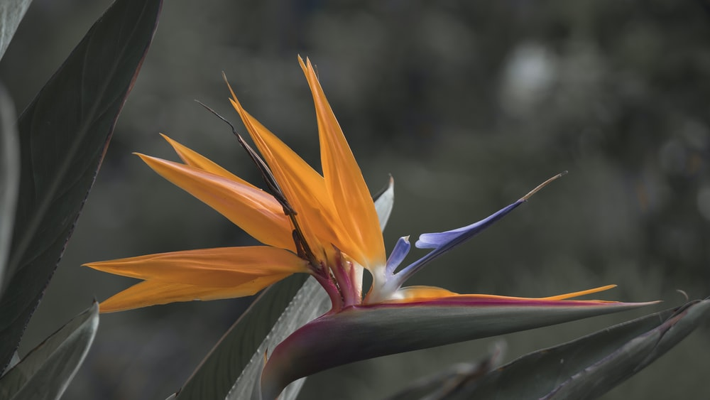 yellow and white birds of paradise in bloom during daytime