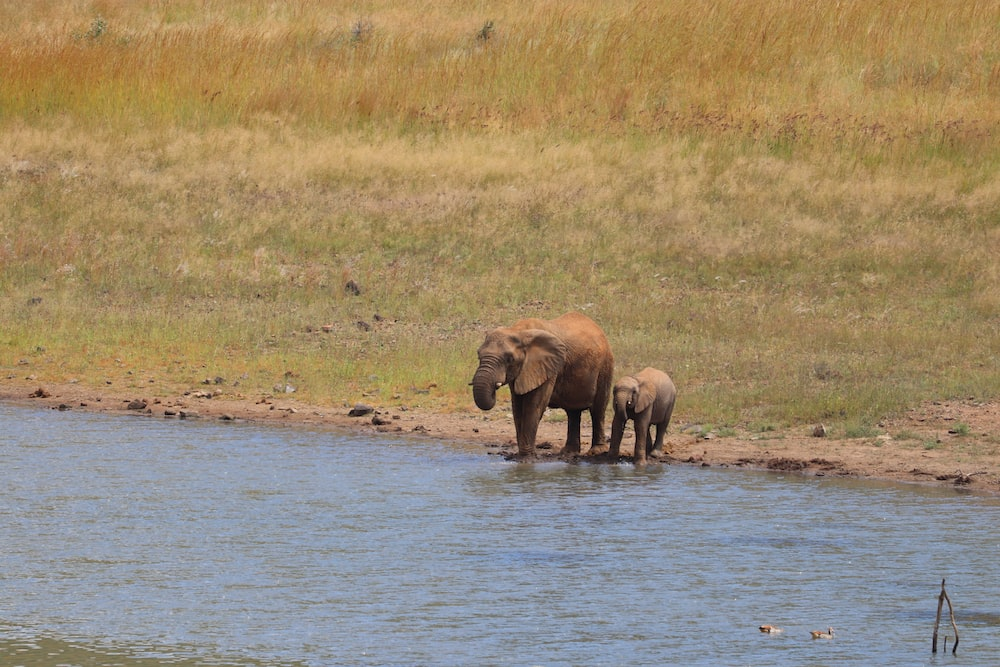 elephant on body of water during daytime