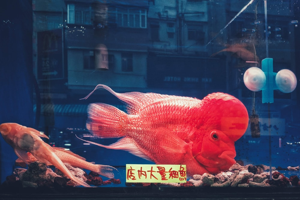 red fish on glass window