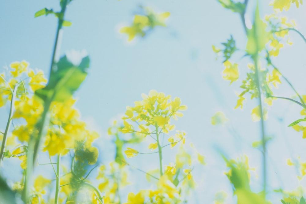 yellow flowers under sunny sky