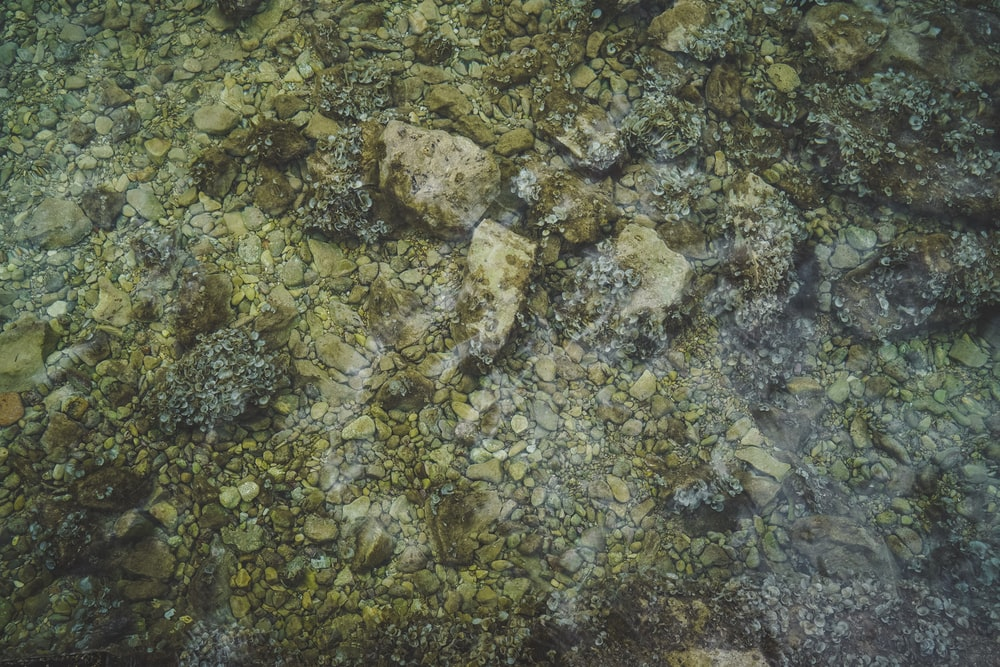 gray and white stone fragments on body of water