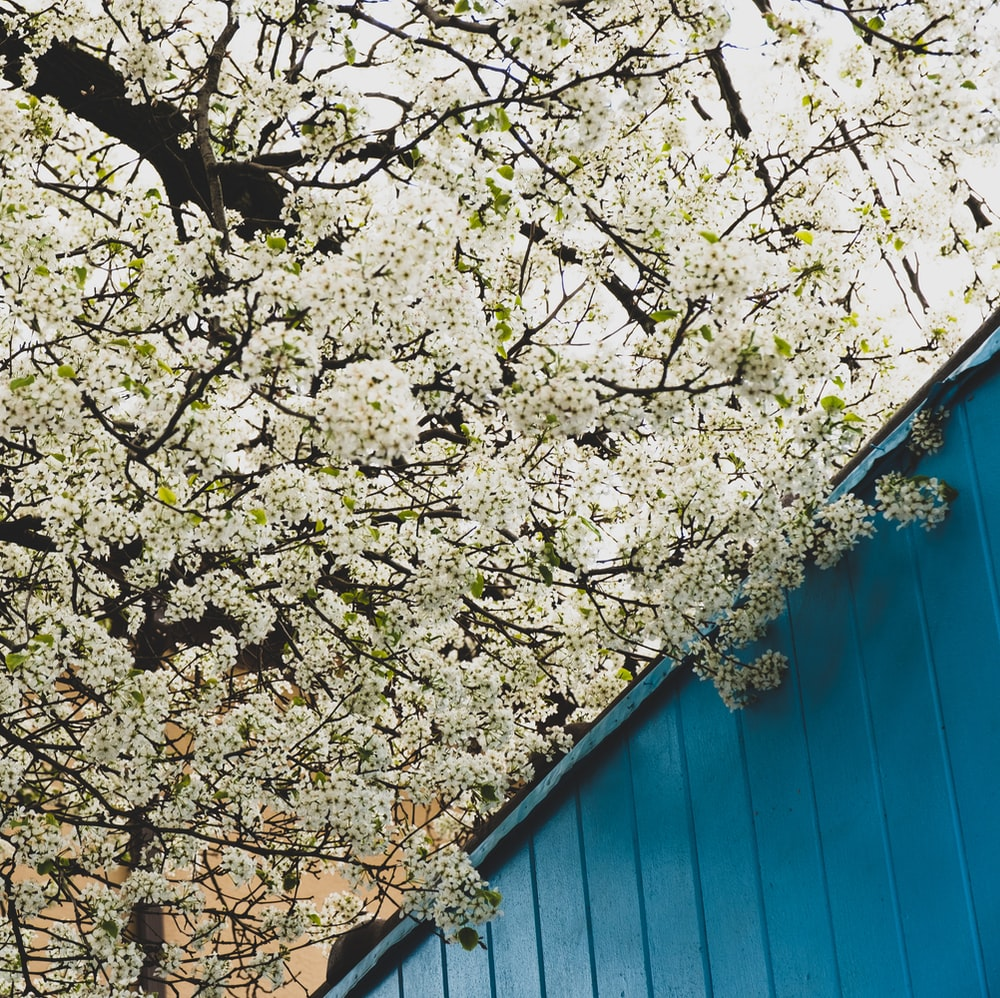 white and brown tree beside blue wooden wall