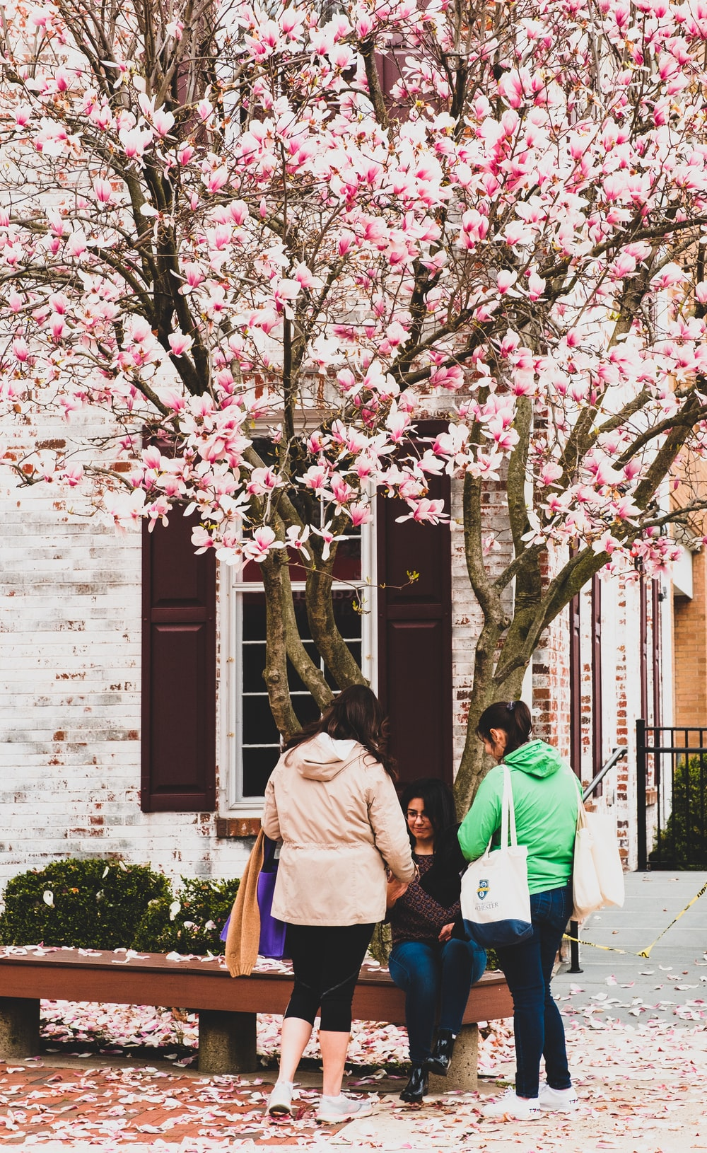 man in green jacket standing near pink cherry blossom tree during daytime