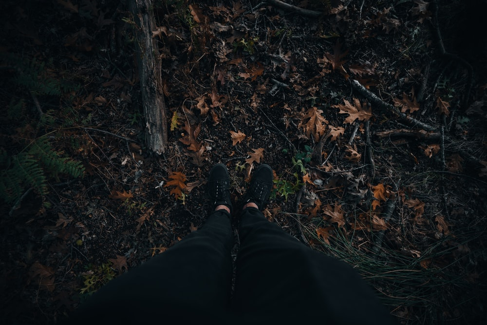 person in black pants and black shoes standing on brown dried leaves