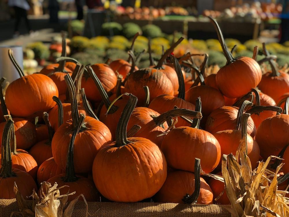 orange pumpkins on brown dried leaves