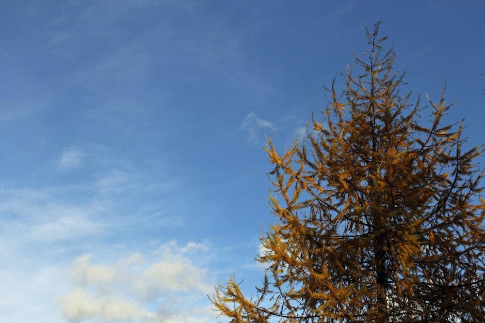 brown tree under blue sky during daytime
