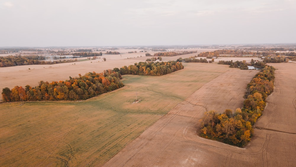 aerial view of green trees and brown field during daytime