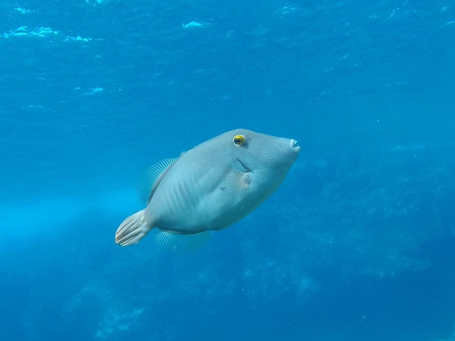 yellow and white fish under water