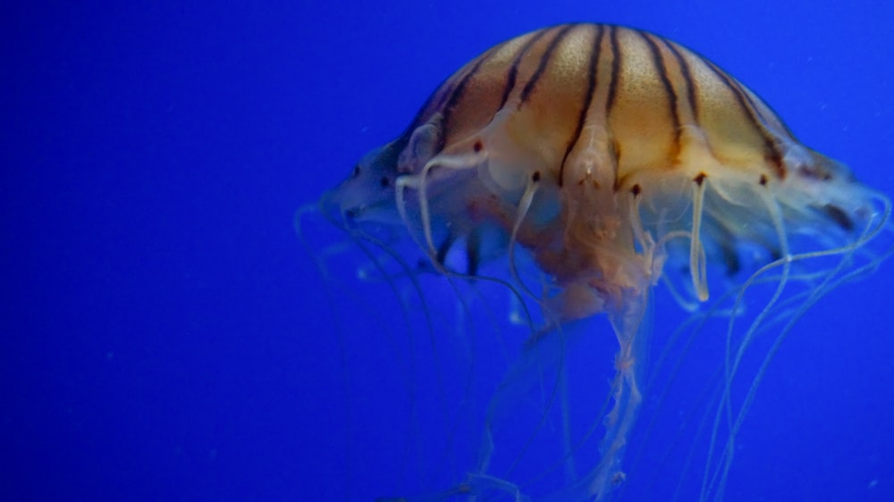 white jellyfish in blue water