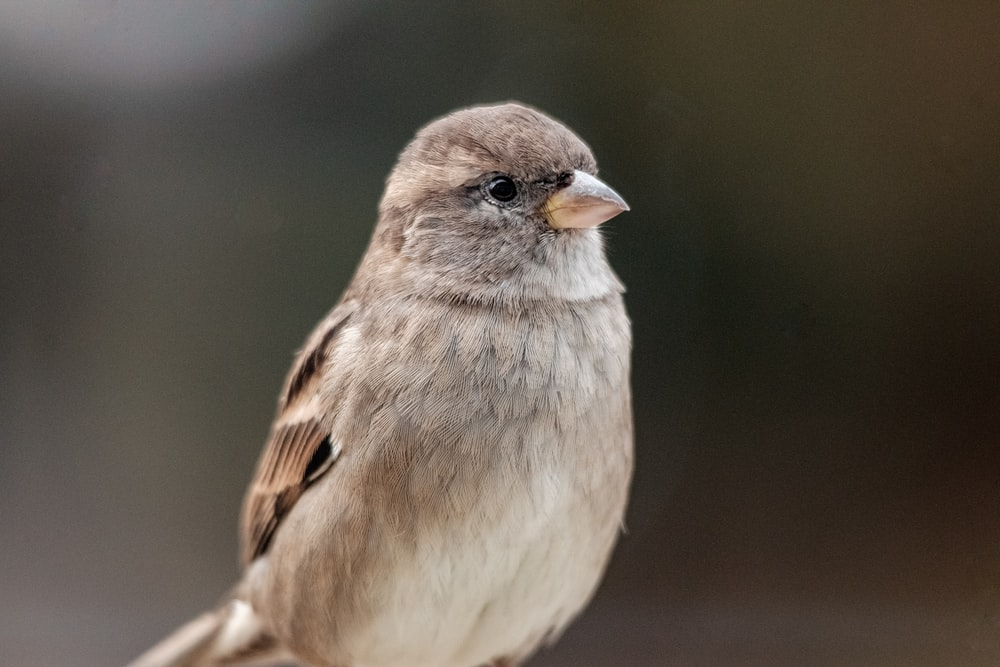 brown bird in close up photography