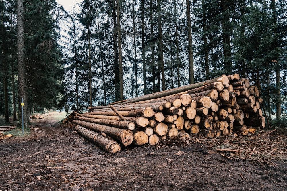 brown wood logs on brown dirt road
