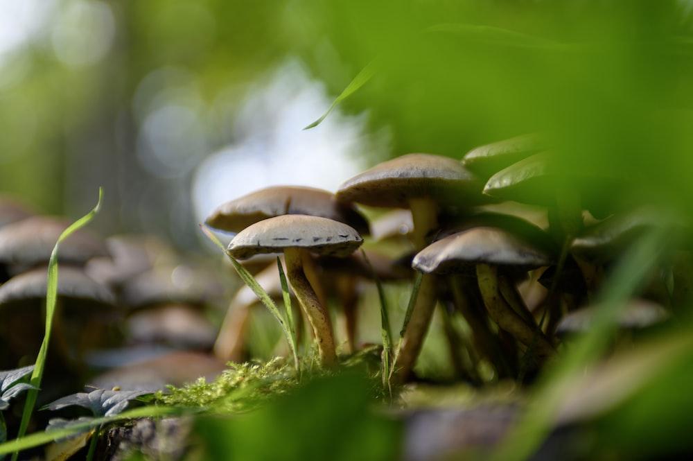 brown mushrooms on green moss
