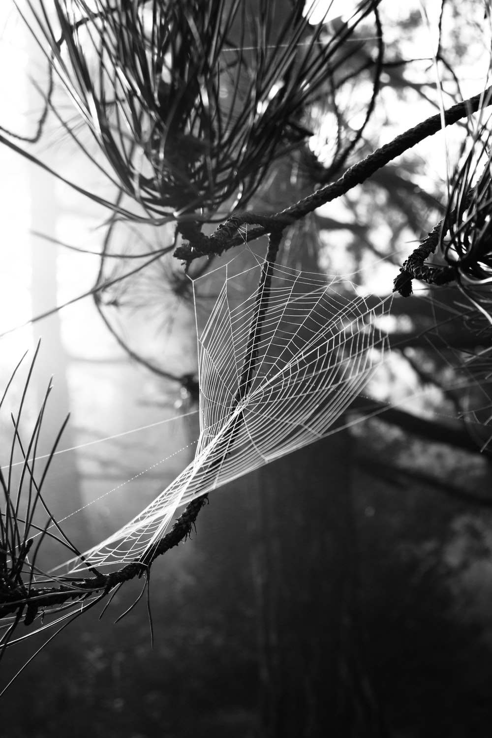 grayscale photo of spider web on tree branch
