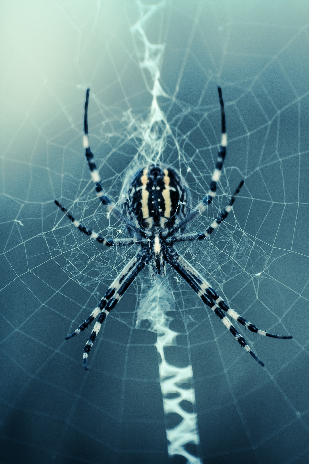 black and white spider on web