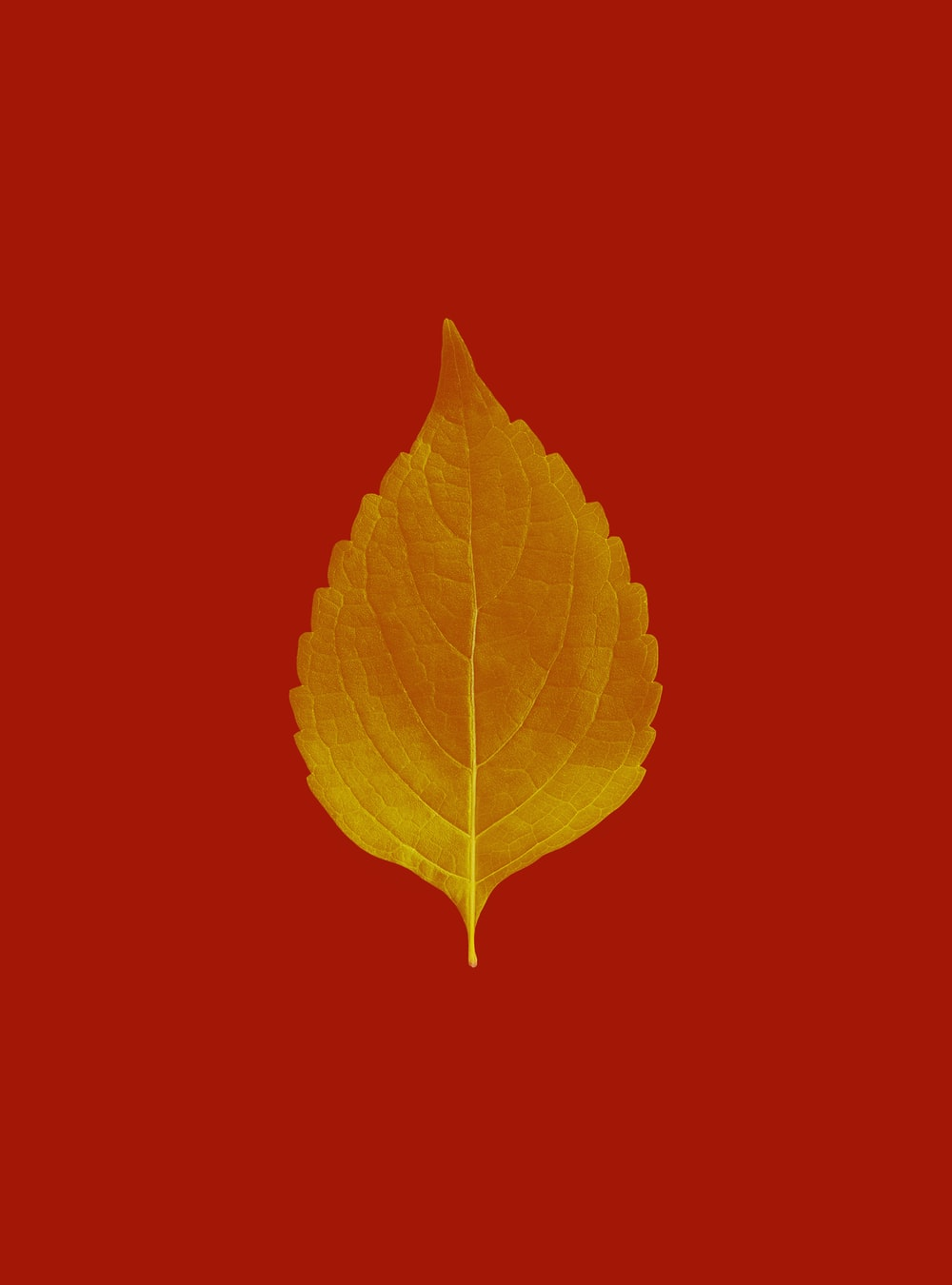 yellow leaf on red background
