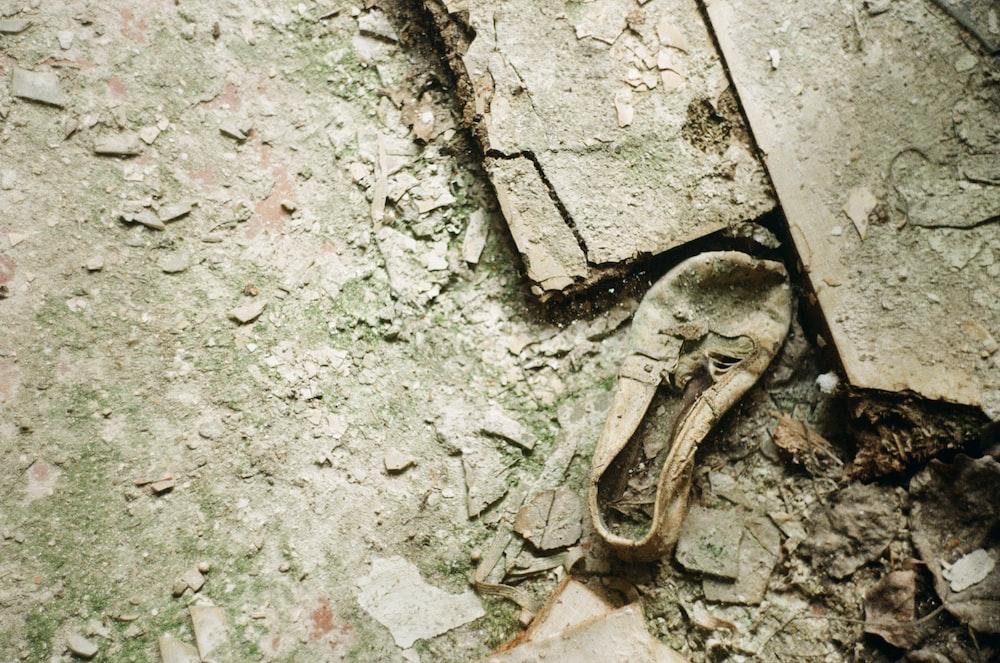 brown wooden animal head on gray concrete floor