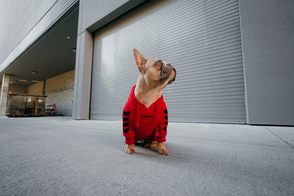 brown short coated dog wearing red shirt and red pants