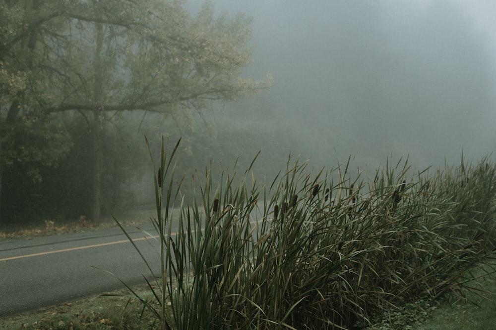 green grass near gray concrete road