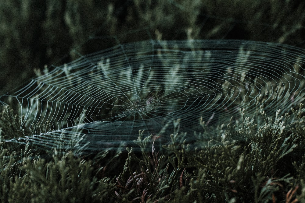 spider web on green grass during daytime