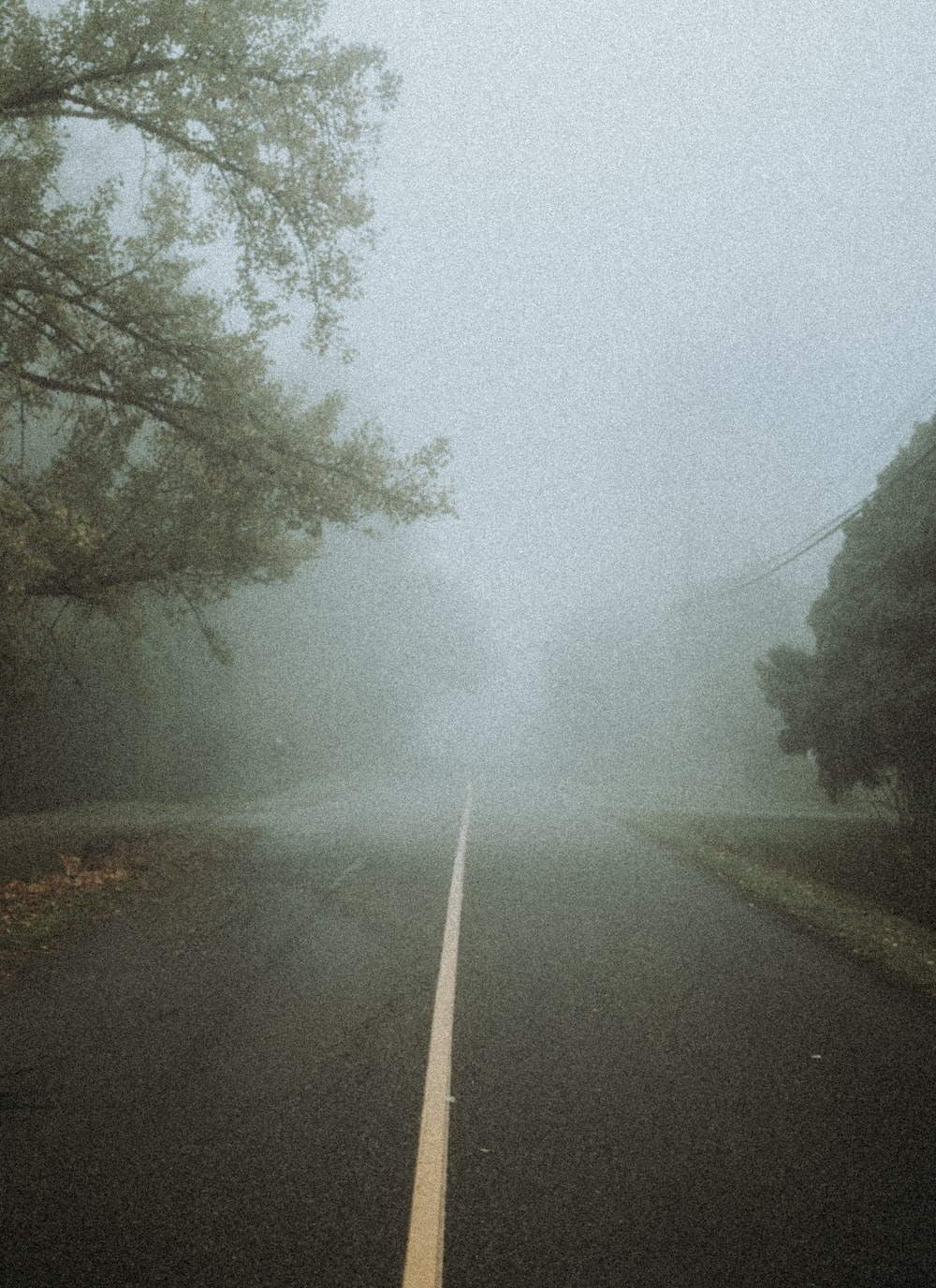 green trees beside road during foggy weather
