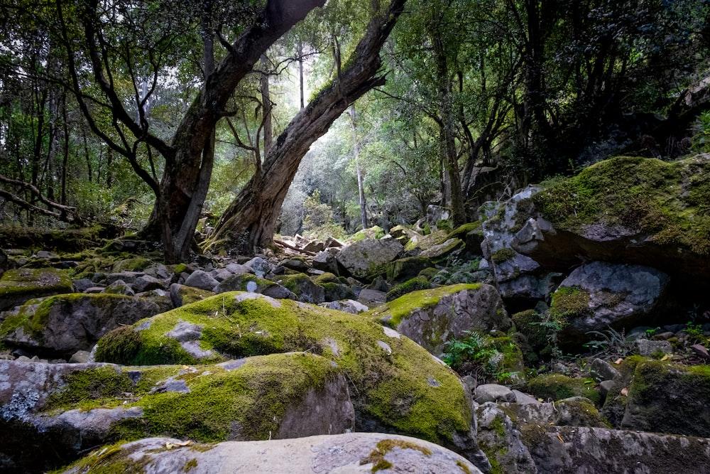 green moss on gray rocks