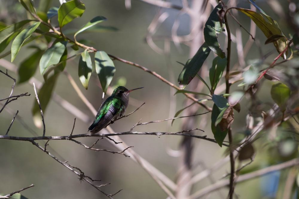 green and black bird on tree branch during daytime