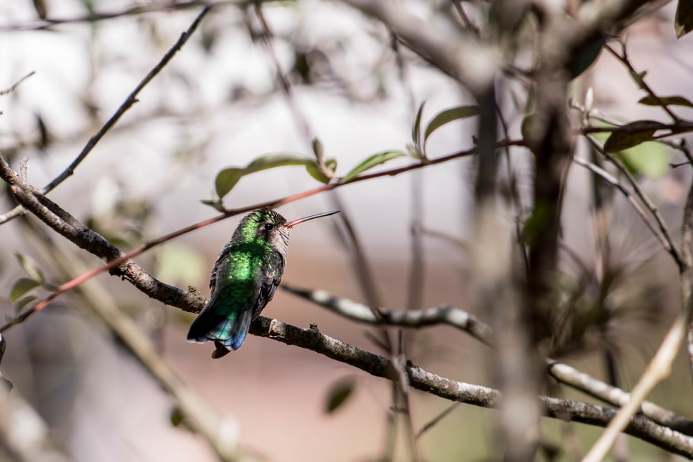 green and blue bird on brown tree branch