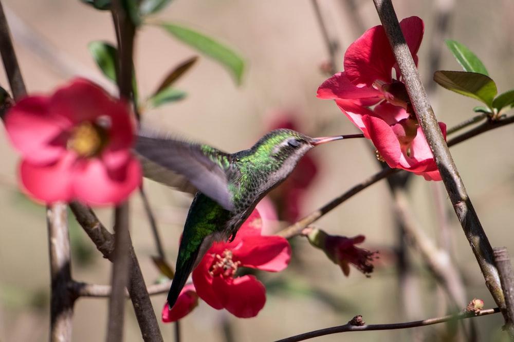 green and black bird flying near red flower