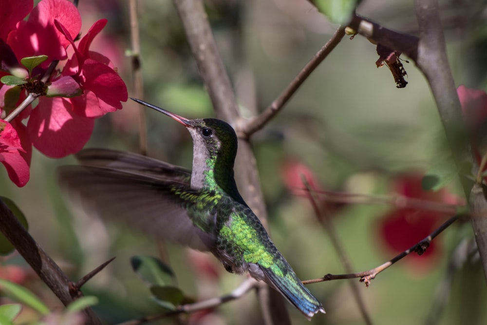 green and black bird flying near red flower