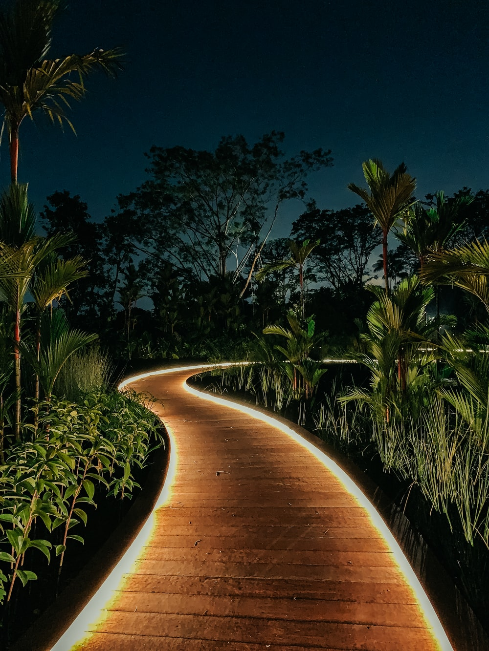 green palm trees near brown pathway